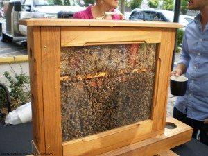 Bees at Starbucks Pet Fair