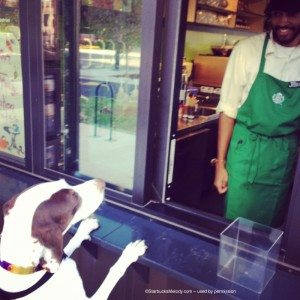image[1] puppy orders beverage 14 October 2013 Chicago shipping container starbucks