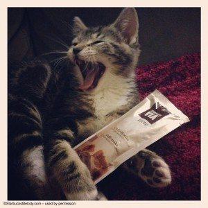 Mocha Via after a Cat Nap2