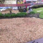 IMAG0097 Finished mulched area of lawn 19 April 2014