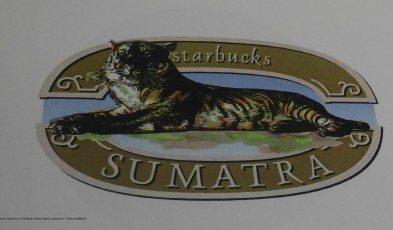 2 - 1 - DSC01566 sumatra