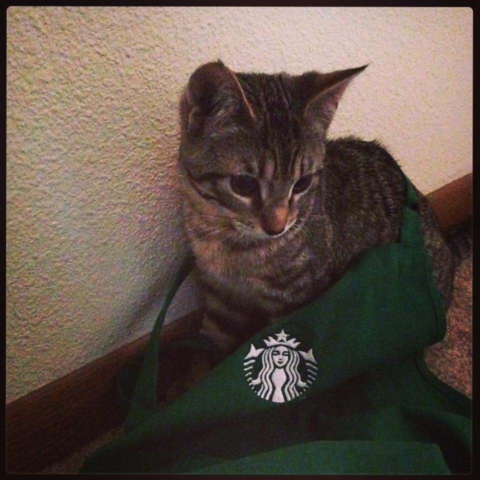 Pets of Starbucks!