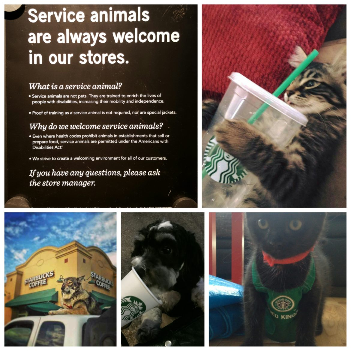 Service Animals are Welcome in Starbucks.
