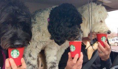 image 3 dogs love Starbucks