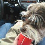 1 - 1 - image Tex gets a puppuccino