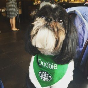 image-2 Doobie is a certified service dog April 2016