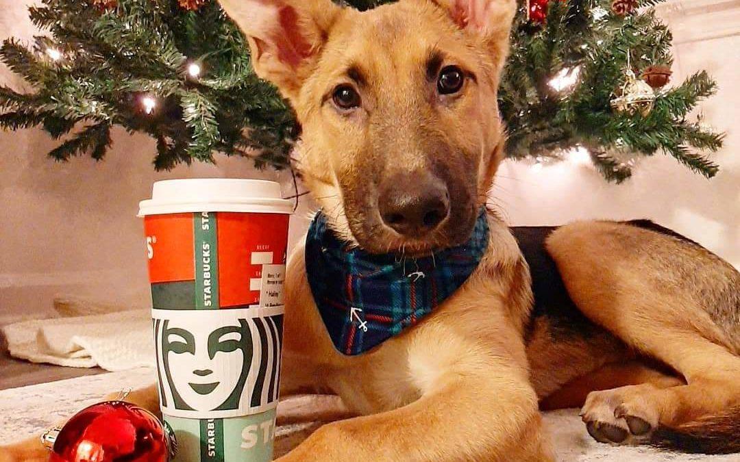 Pets of Starbucks.